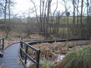 The raised boardwalk around the marsh.