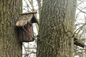 Nest Box at Jacksons Coppice