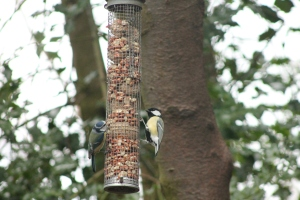 Blue and Great Tit at Jacksons Coppice