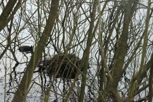 Nest 2a