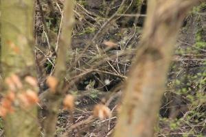 Spot the rabbit!