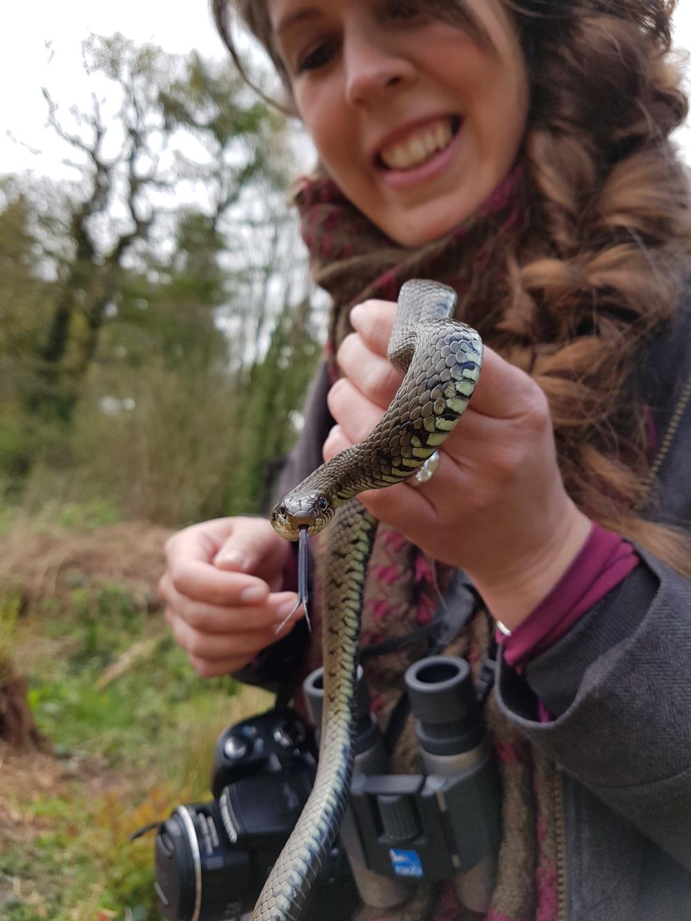 grass snake6