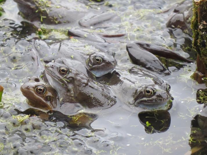 frog14