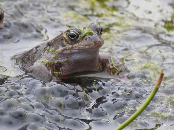 frog17