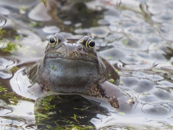 frog19