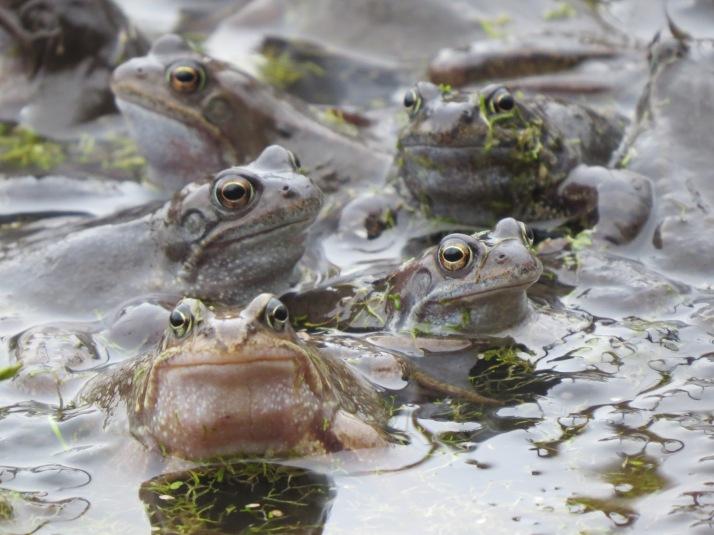frog25