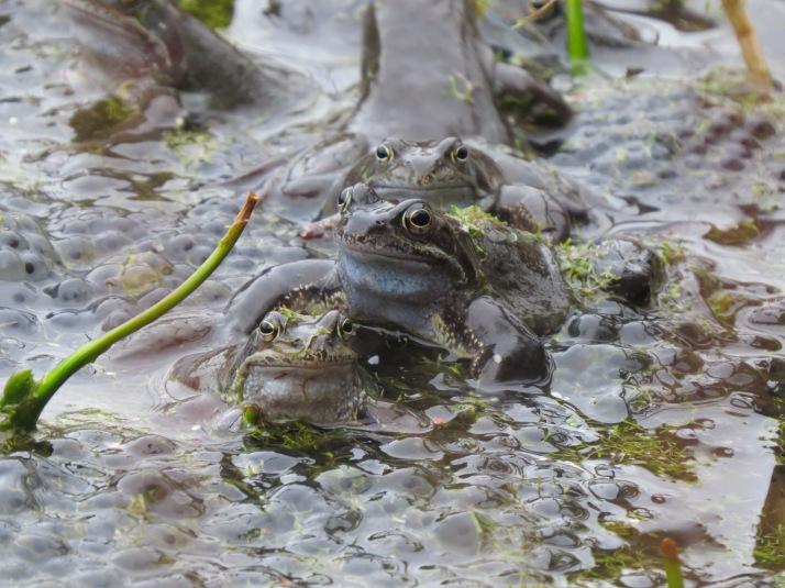 frog26