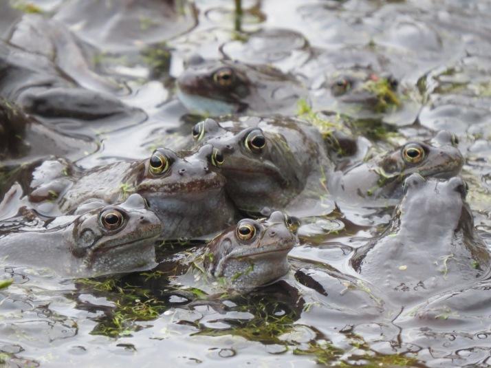 frog27 (2)