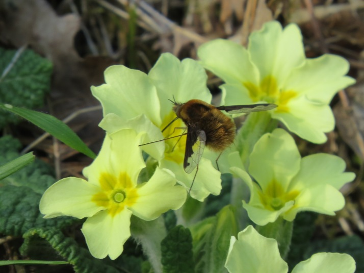 bee fly 3