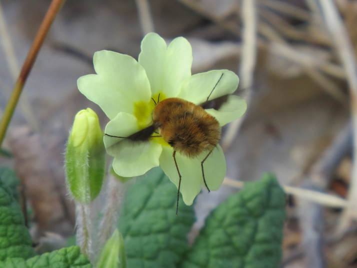 bee fly 5